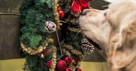 The real cost of owning a pet - image dogwithchristmastree on https://www.deltafinancialgroup.com.au